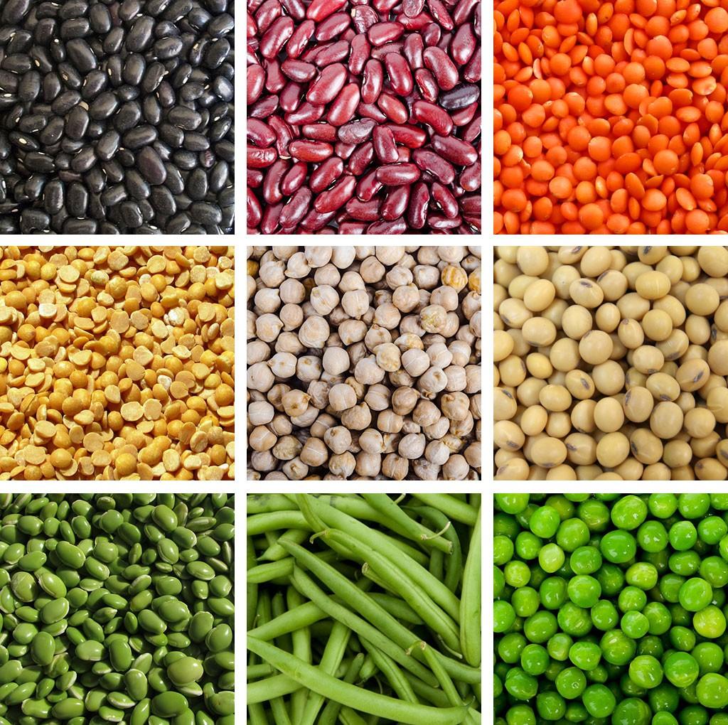 Legumes Haleo