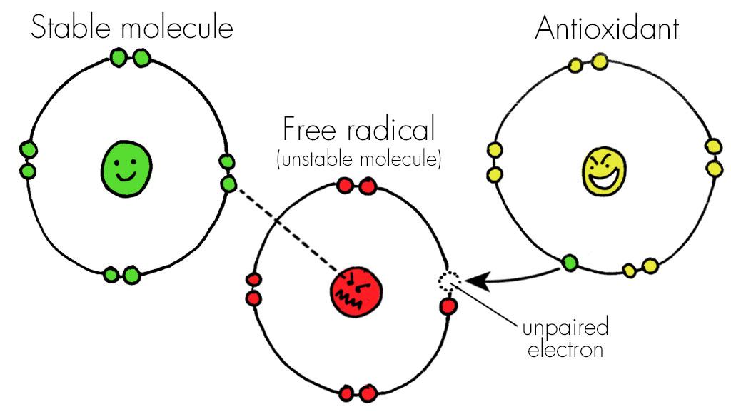 Kết quả hình ảnh cho antioxidant