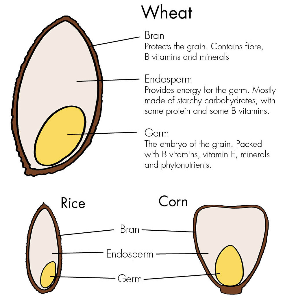 Whole grains - Haleo
